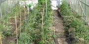 Опоры для садовых растений стеклопластиковые от производителя